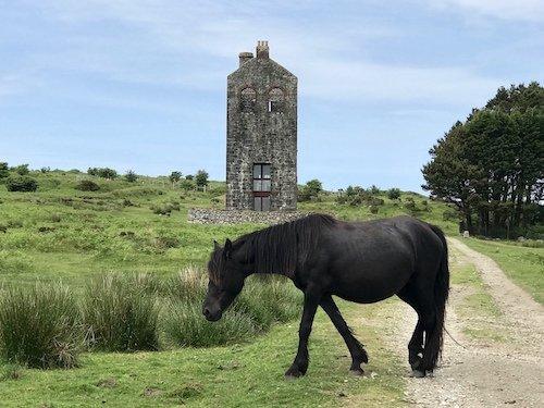 Best of Cornwall 2